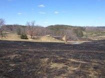 after a prairie burn