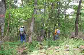 treating invasives while preserving native plants