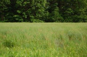 pothole wetland, Dane Co. - a Quercus-managed site with rare species